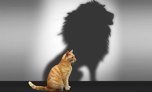 A coragem (já) está dentro de você