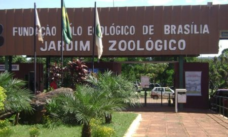 Concurso Zoologico de Brasilia
